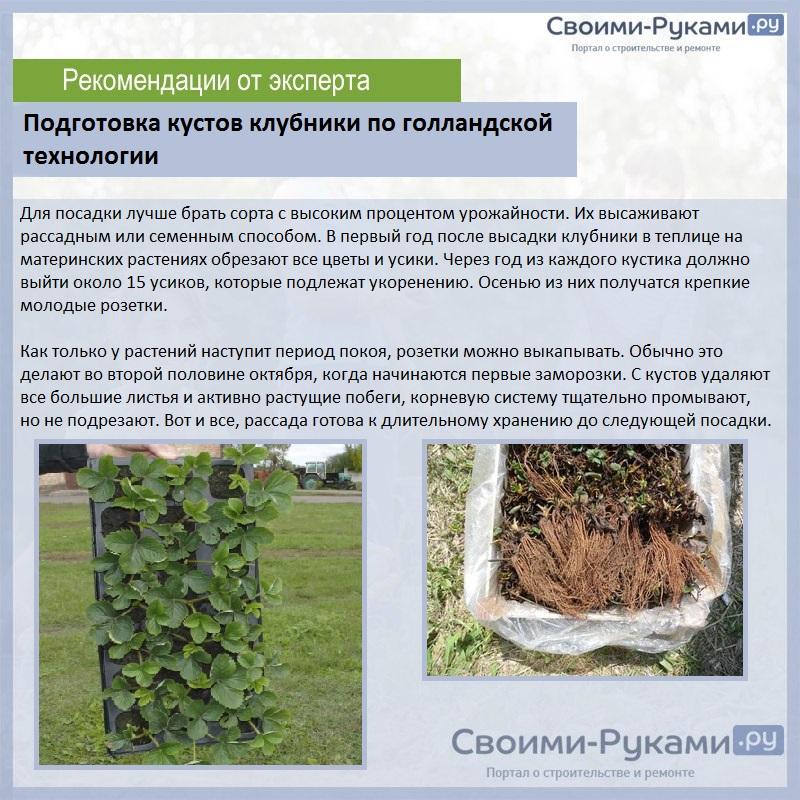 Выращивание земляники из семян: основные этапы и правила ухода