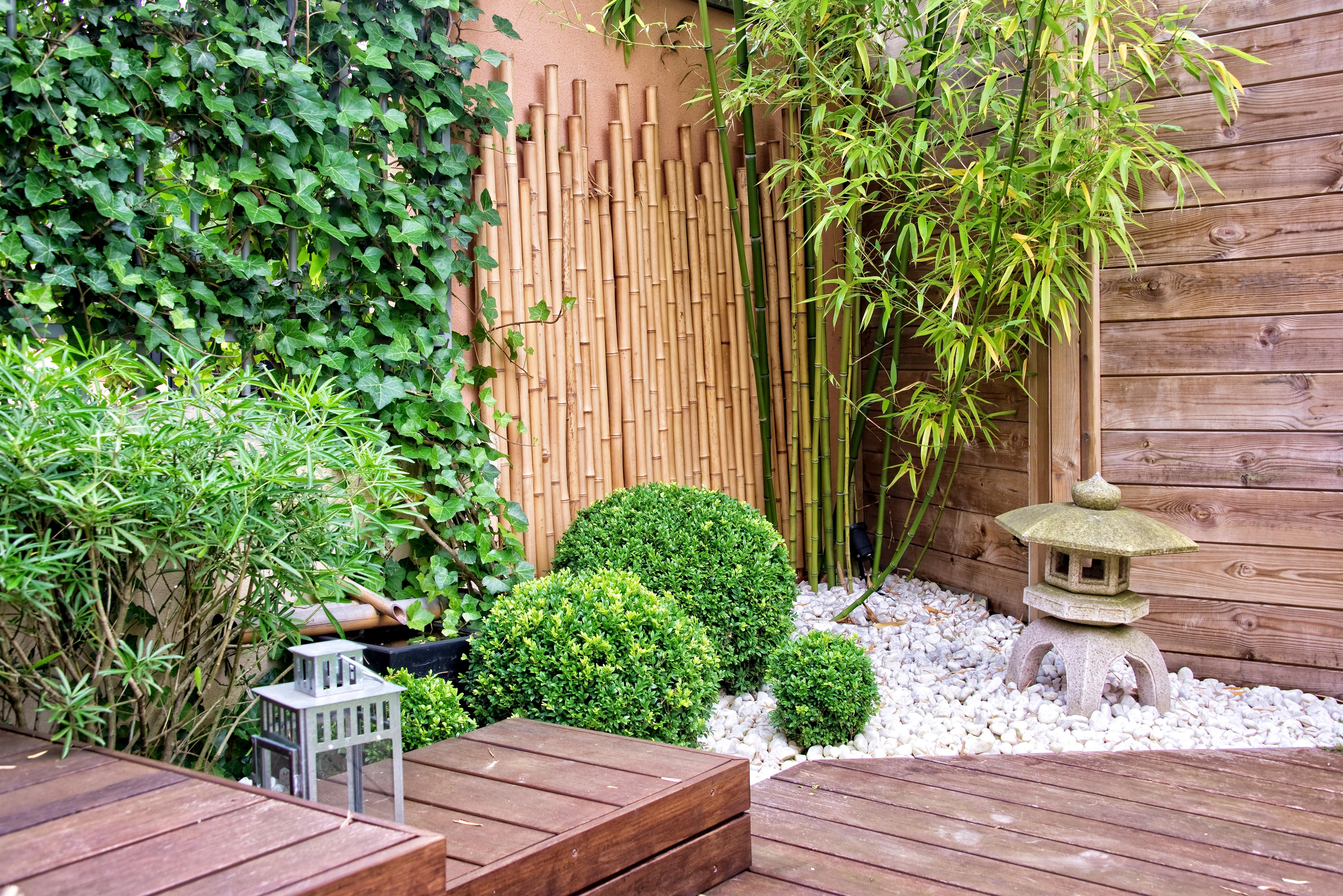 Бамбук: посадка и уход в открытом грунте, виды и сорта с фото