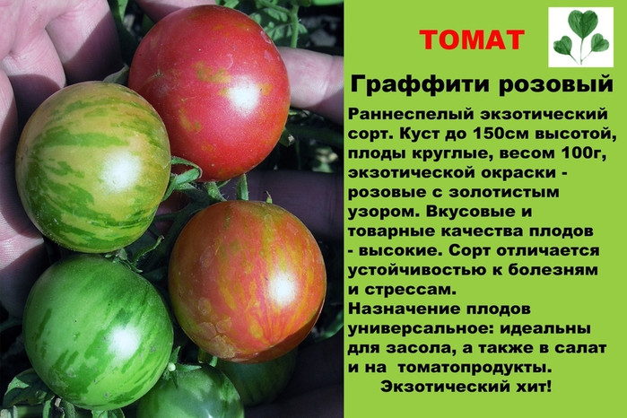 Описание томата Пасхальное яйцо, его характеристика, правила выращивания сорта
