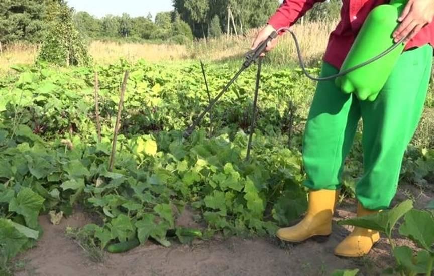 Медный купорос: применение в садоводстве, обработка весной, осенью помидор, огурцов, картофеля, винограда, деревьев и растений