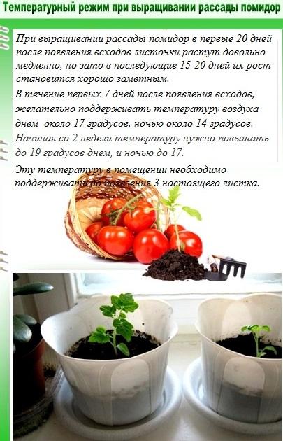 Выращивание рассады: сроки, досвечивание, оптимальная температура