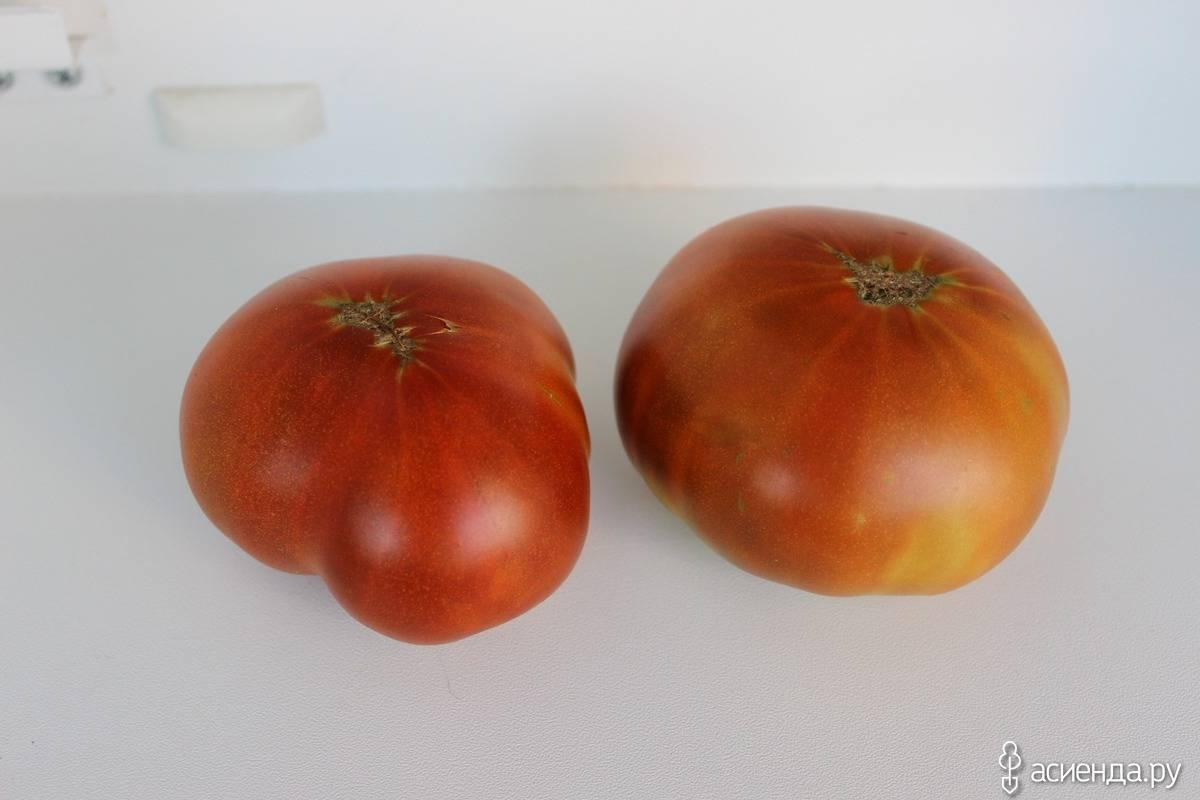 Томат беркли тай дай: описание сорта, как выращивать с фото