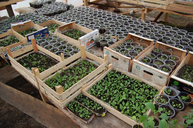 Бизнес идея питомник – выращивание саженцев с расчетами