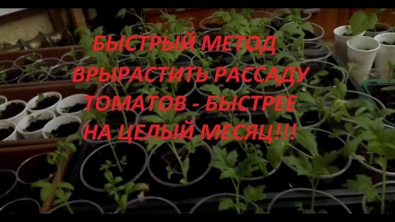Метод терехиных по выращиванию томатов: 7 ценных советов для хорошего урожая, которыми пользуются многие дачники