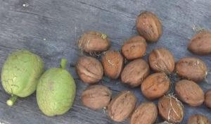 Настурция: посадка и уход, фото, когда сеять семена в грунт и на рассаду, когда пересаживать и собирать семена