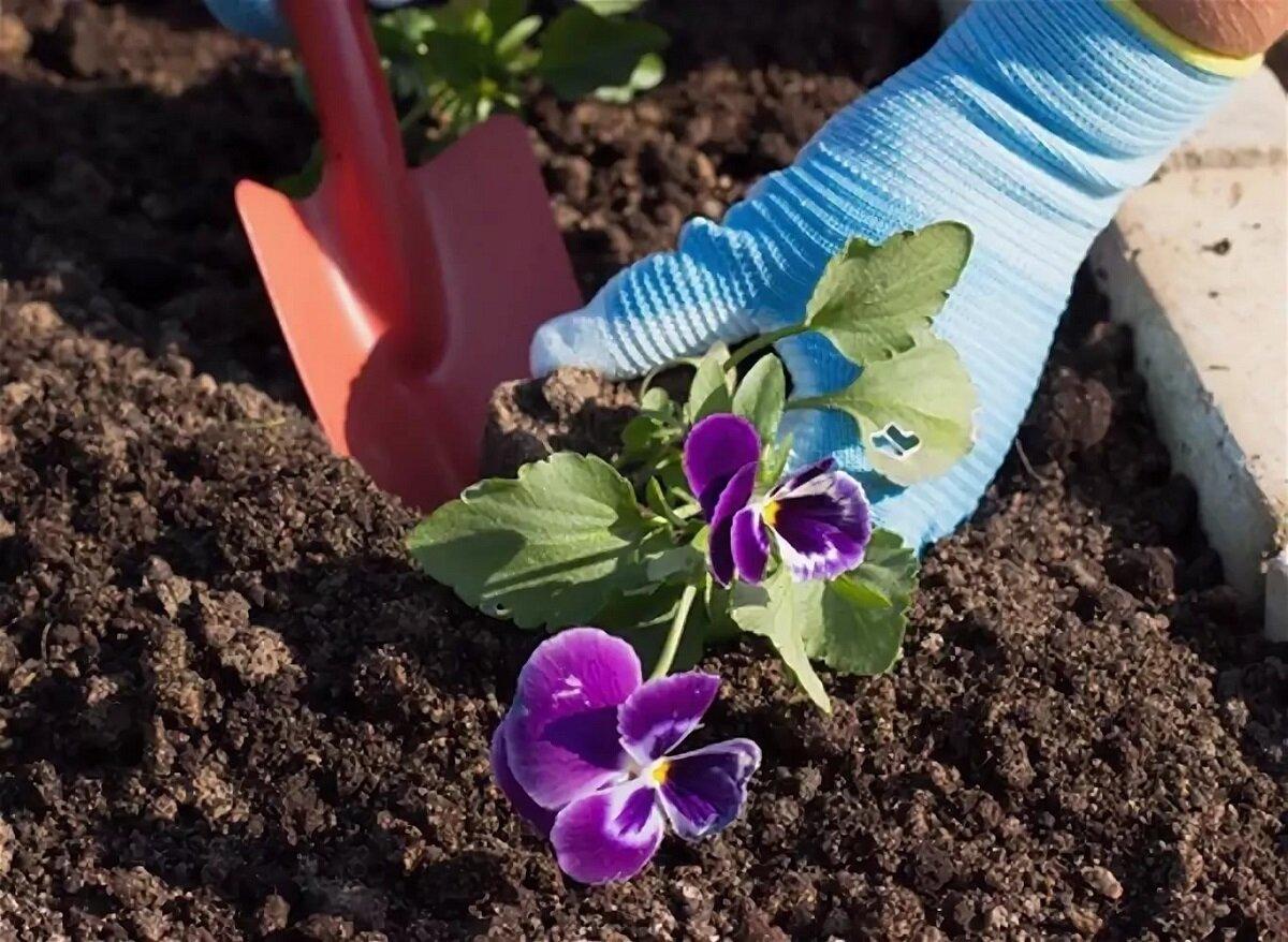 Эшшольция: выращивание из семян, когда сажать, особенности ухода и полива, фото