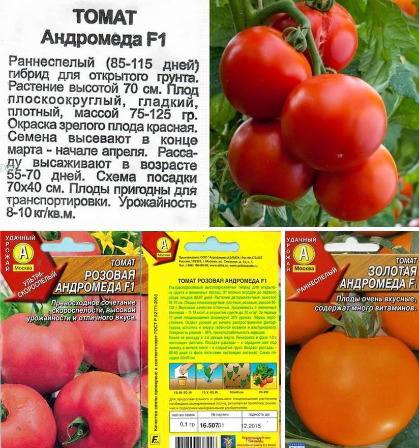 Ультраскороспелый томат «катя»: описание сорта и характеристика плодов