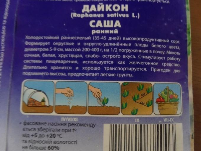 Редька дайкон: посадка и уход в открытом грунте и в теплице, сроки посева семенами, как сажать сорта миноваси и саша