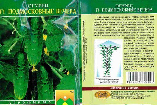 Огурец «подмосковные вечера» — описание характеристик, посадка и уход, урожайность сорта f1 и выращивание из семян (фото)
