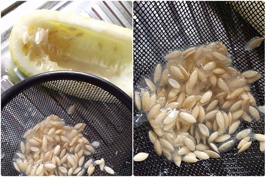 Подготовка семян огурцов к посеву на рассаду: как правильно подготовить посевной материал, надо ли замачивать и проращивать перед посадкой русский фермер