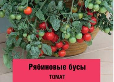Томат рябиновые бусы — описание и характеристика сорта   zdavnews.ru