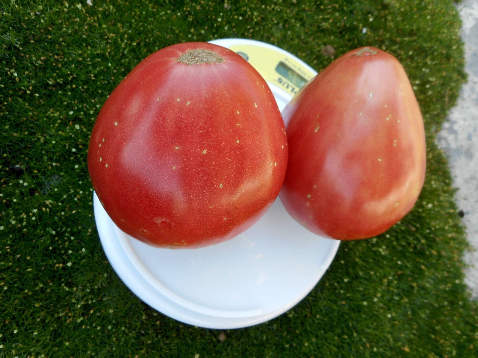 Томат хлебосольный: правила выращивания