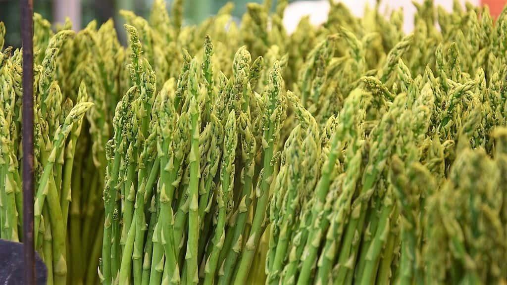Спаржа –  выращивание, польза, свойства, рецепты