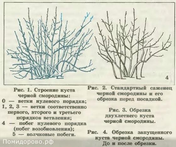 Уход за вишней весной и как ухаживать осенью: размножение, полив и прочие инструкции по выращиванию + видео
