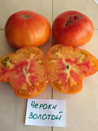 Томат «чероки». описание сорта: характеристика урожайности и агротехника посадки, ухода и выращивания помидора (фото)