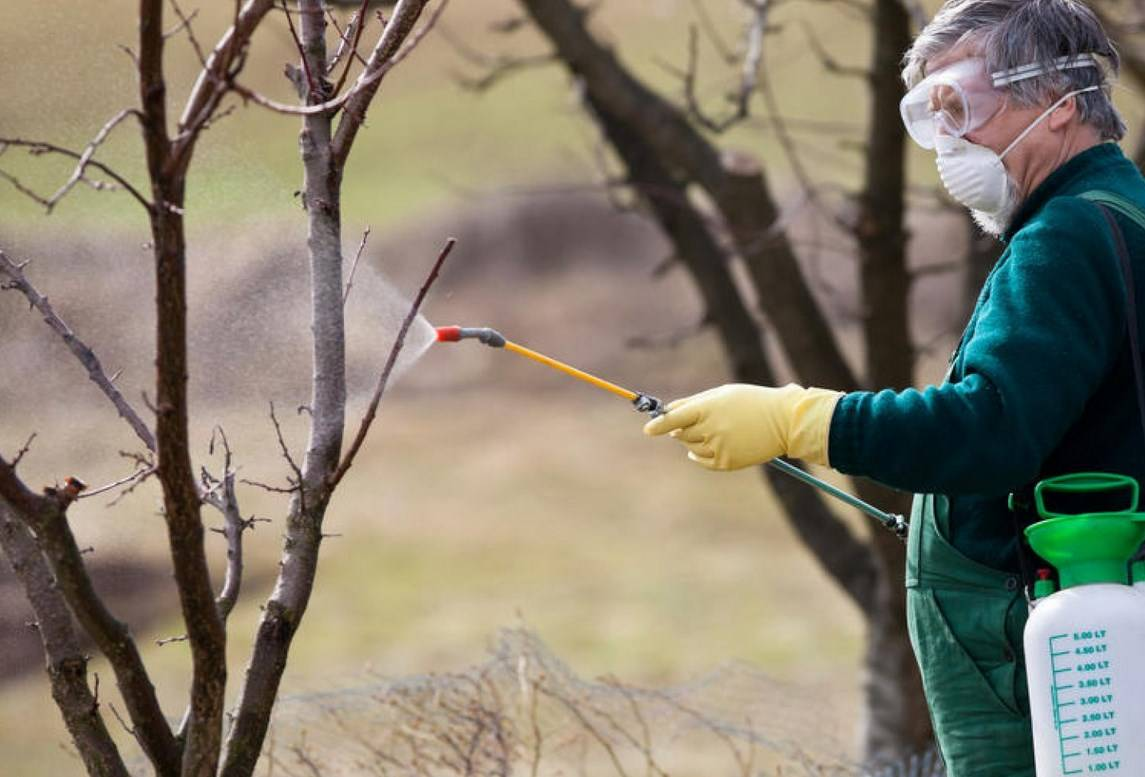 Побелка деревьев осенью и весной