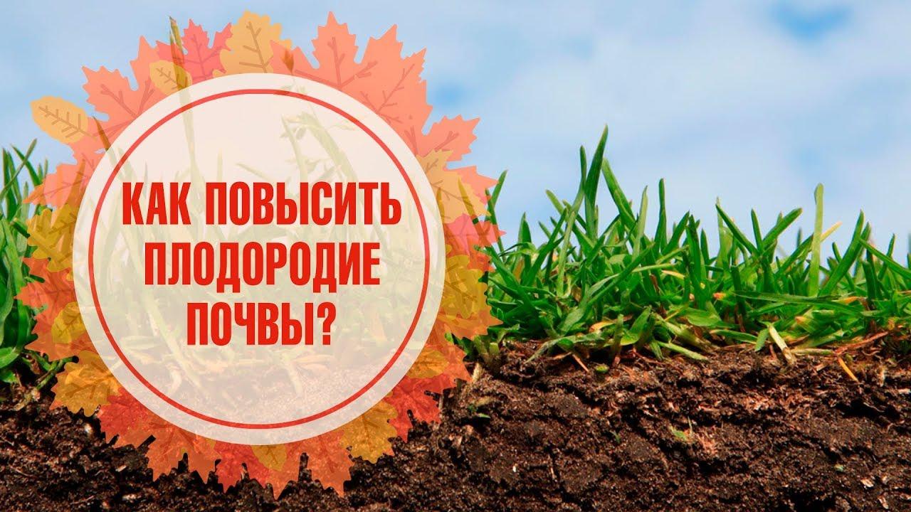 Плодородие почвы: от количества чего в ней зависит плодородность? что является внешним признаком плодородия и что это такое? какая почва наиболее плодородная?