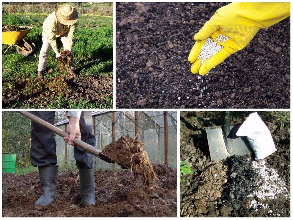 Шпинат: выращивание на огороде из семян