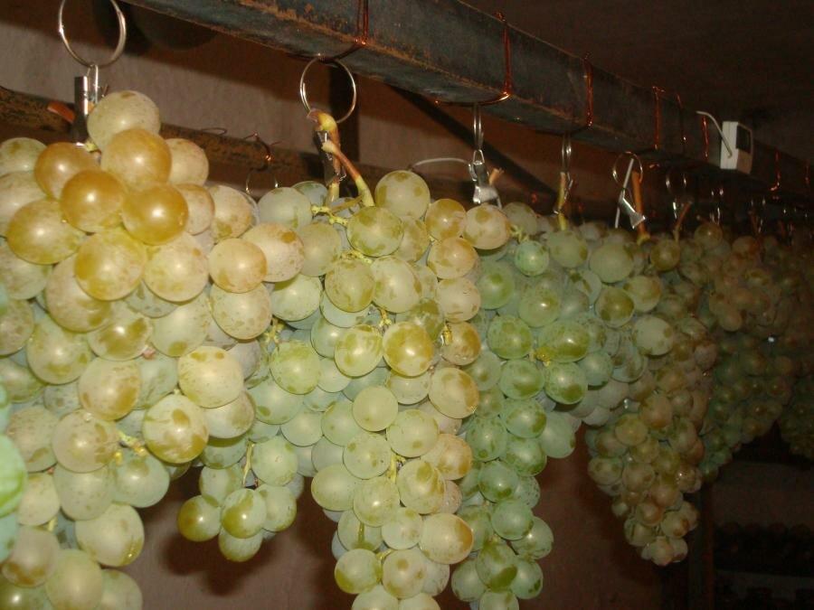 Хранение черенков винограда в домашних условиях. где хранить черенки винограда до весны | дачная жизнь