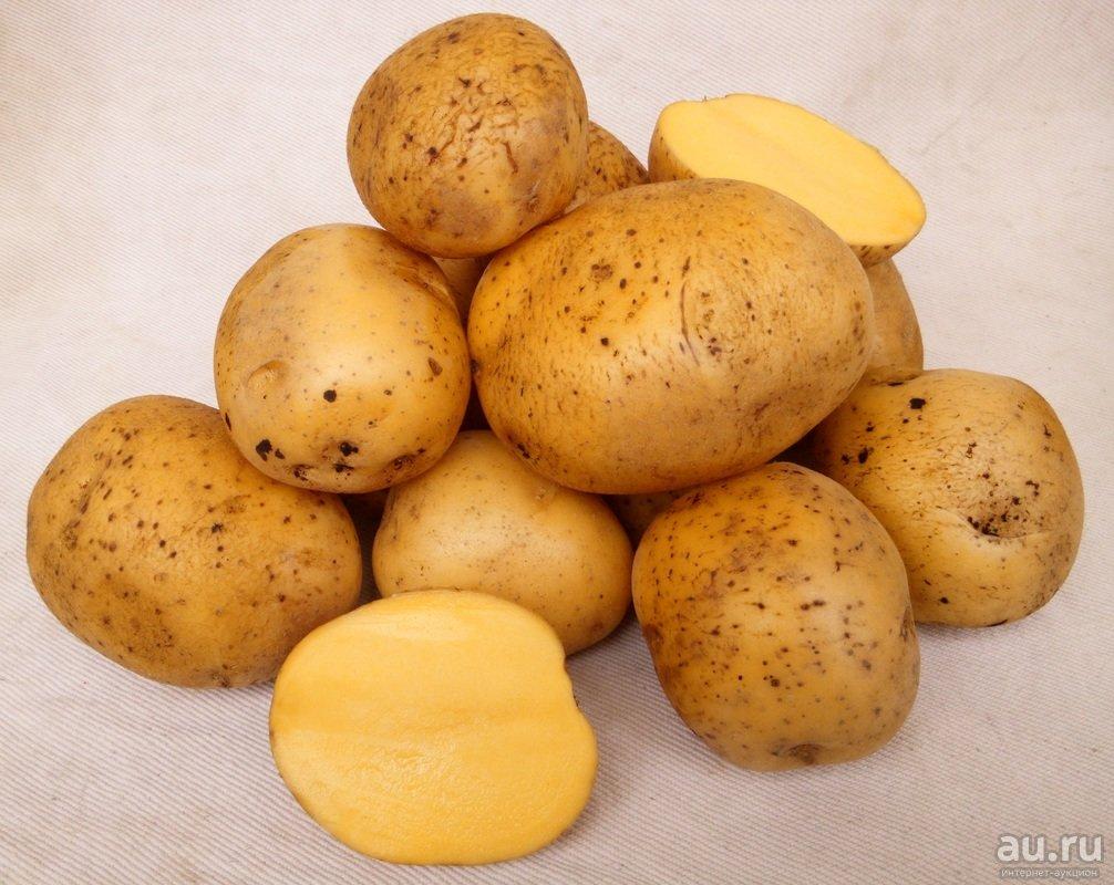 Картофель сорта гала: описание. история, характеристики