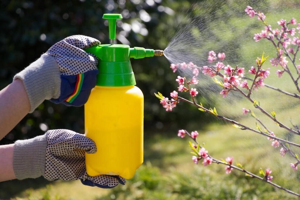Народные и альтернативные средства обработки капусты от вредителей