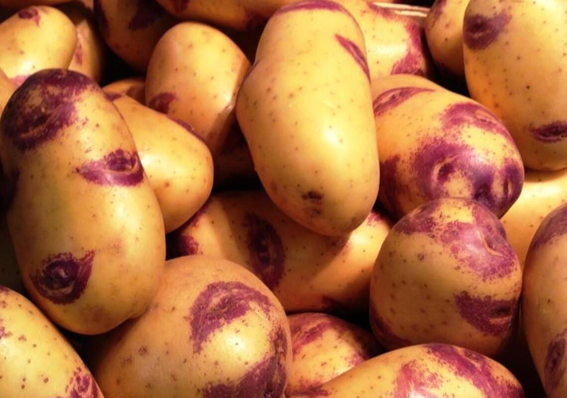 Картофель иван-да-марья: описание своеобразия сорта и важные аспекты выращивания