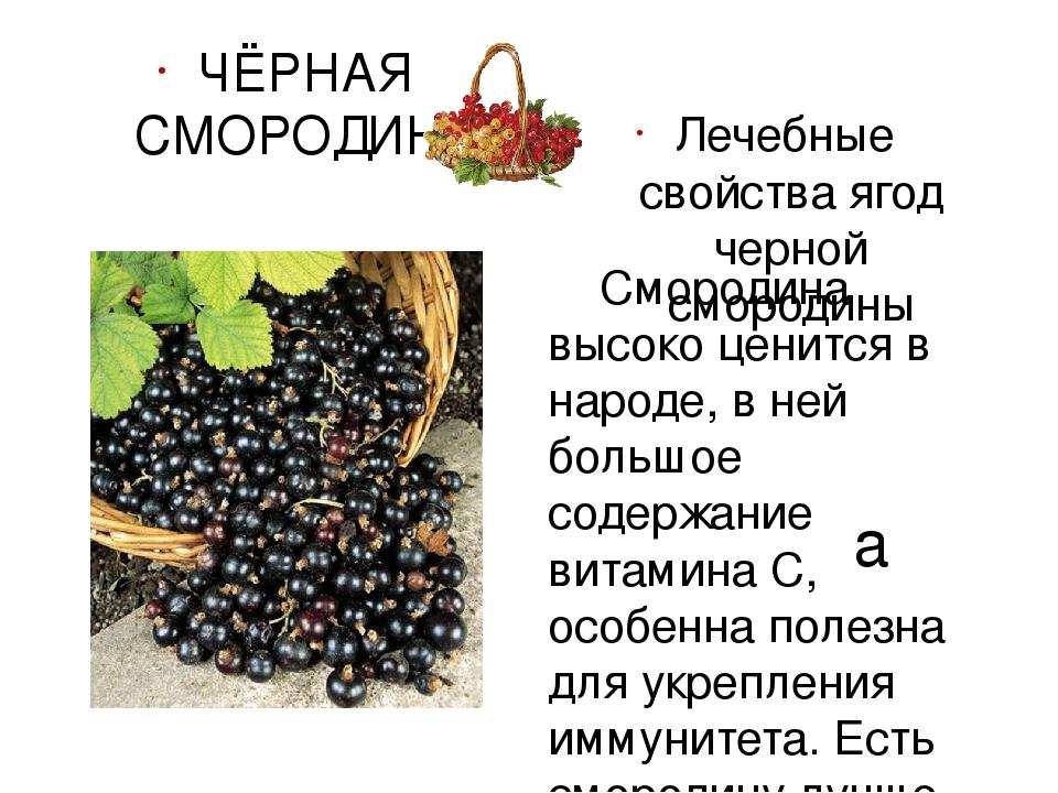 Красная смородина польза и вред для организма, лечебные свойства