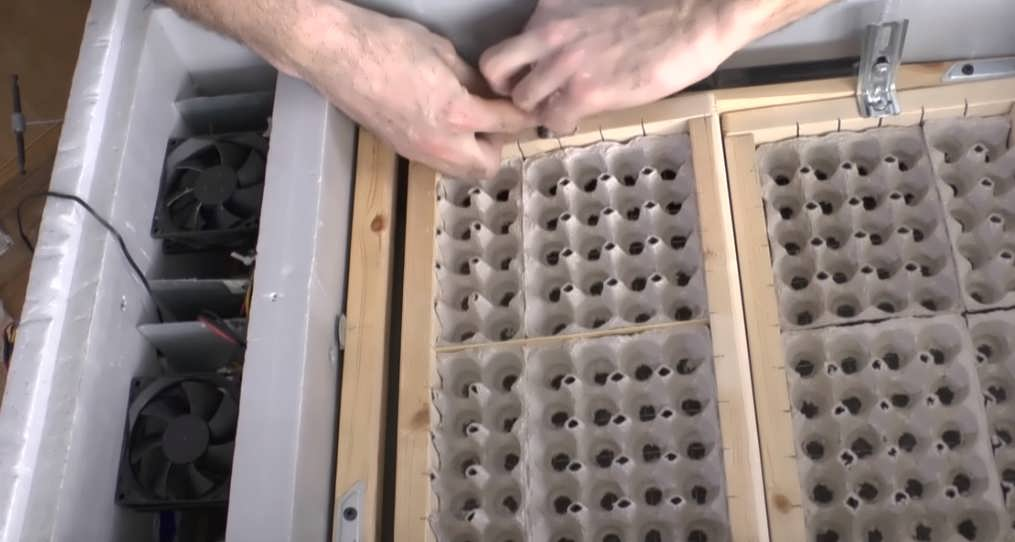 Инкубатор для яиц своими руками: как сделать в домашних условиях инкубатор из пенопласта и других материалов