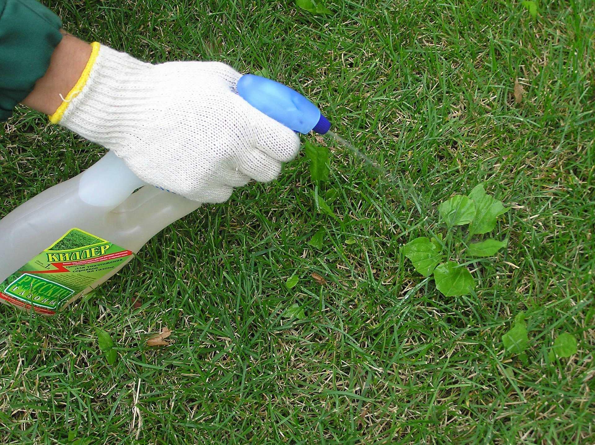 Вьюнок полевой как избавиться, фото, методы борьбы, гербициды от вьюнка полевого на картофеле, crop science