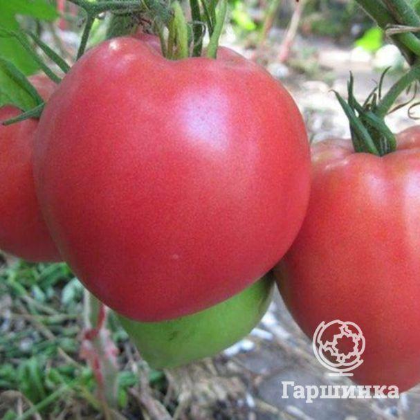 Томат обские купола: отзывы, фото, урожайность, описание и характеристика сорта | tomatland.ru