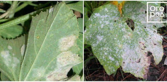 Отравление дыней: симптомы, что делать, лечение   компетентно о здоровье на ilive