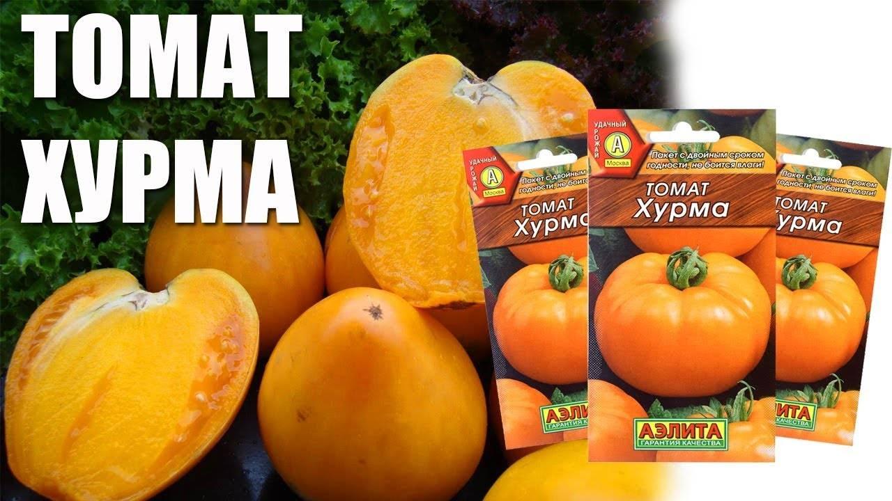 Томат хурма: описание сорта, урожайность и характеристика