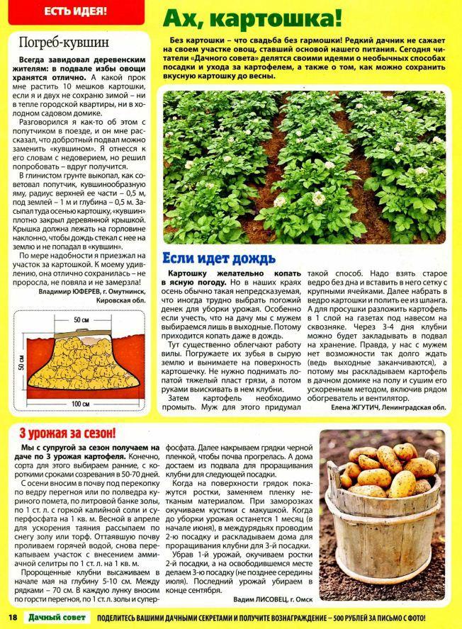 Что делать если плохо растет картофель: причины и решение проблемы
