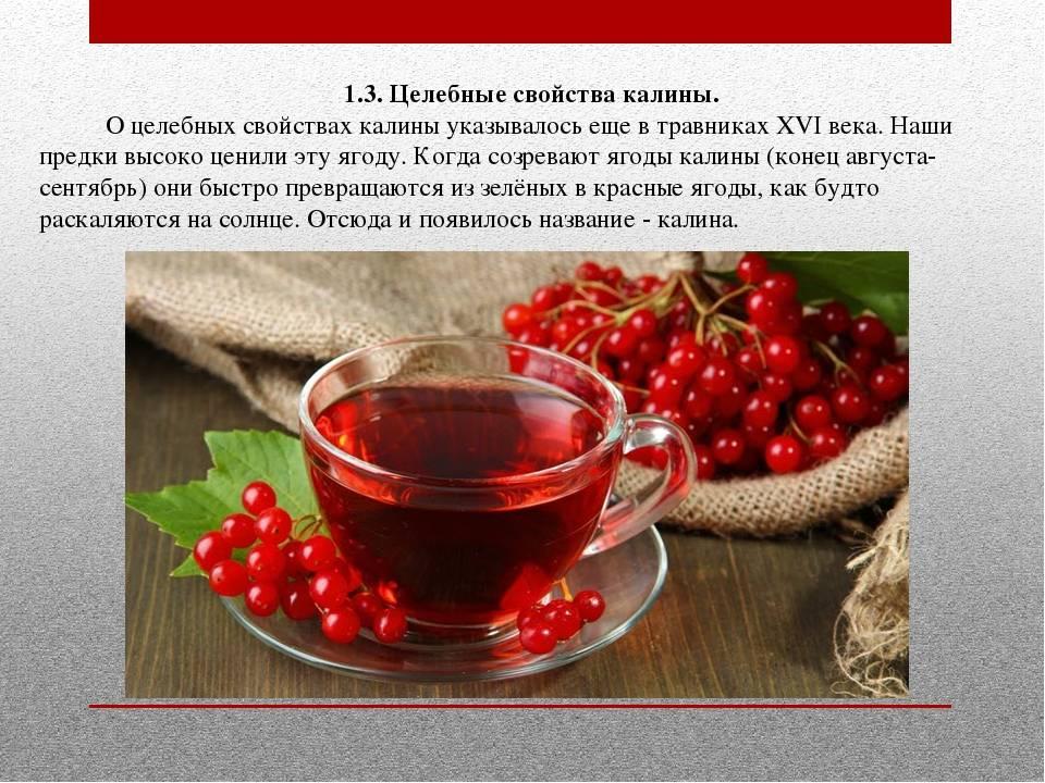 Калина от кашля: лечебные свойства, рецепты