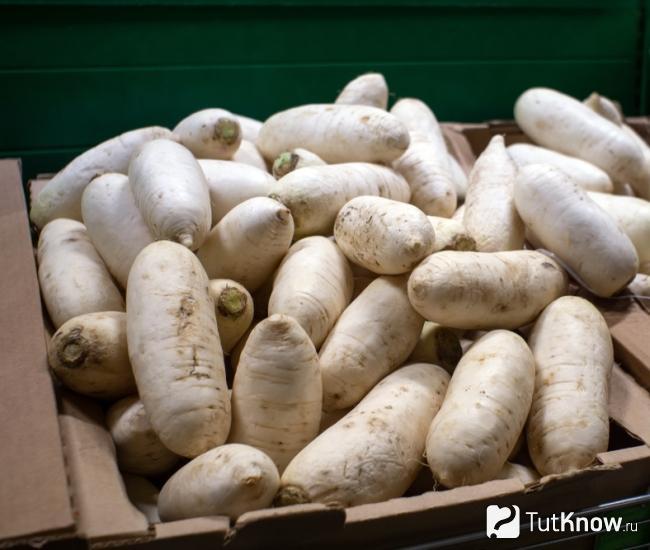 Посадка дайкона семенами в открытый грунт: сроки посева японской редьки и правила ухода за ней, а также как выращивать сорта саша, миноваси и другие? русский фермер