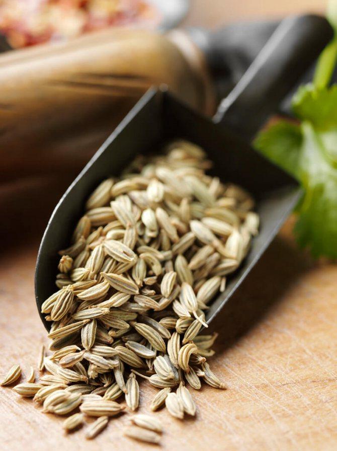 Семена укропа: полезные свойства и противопоказания, применение