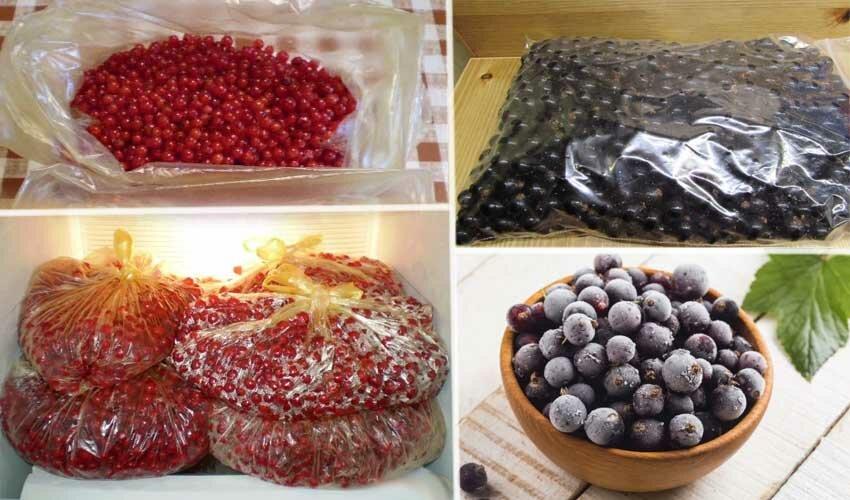 Как сохранить красную смородину на зиму в свежем виде: советы, видео