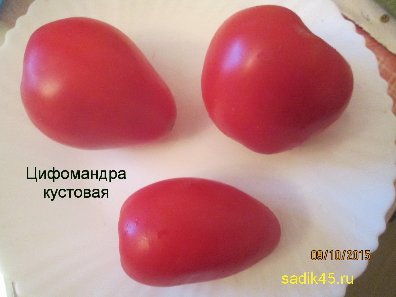 Томат цифомандра описание сорта, достоинства и недостатки, фото русский фермер
