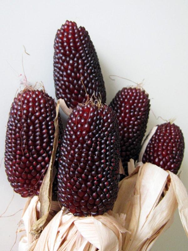 Описание сорта земляничной декоративной кукурузы, ее посадка, выращивание и уход