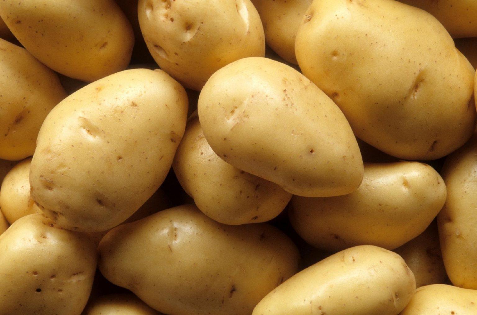 Картофель янка характеристика сорта отзывы вкусовые качества