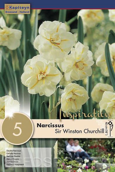 Нарциссы махровые: разнообразие сортов, посадка и уход