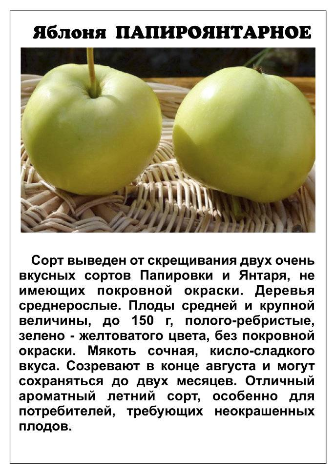 Яблоня апрельское: особенности сорта и ухода