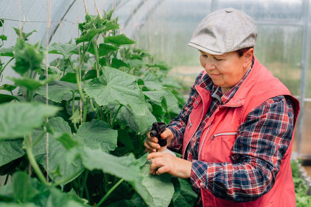 Чем подкормить огурцы для роста в теплице — 5 народных рецептов