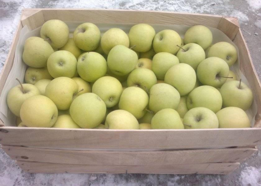 Яблоня голд раш: описание, фото, характеристика плодов