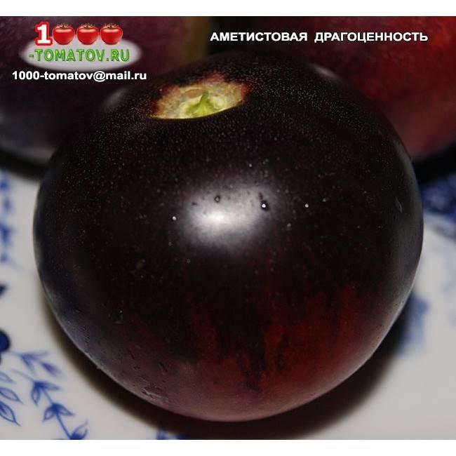 Томат аметистовая драгоценность: характеристика и описание сорта с фото