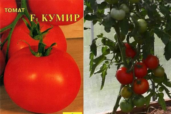 Томат кумир: описание сорта, отзывы, фото | tomatland.ru