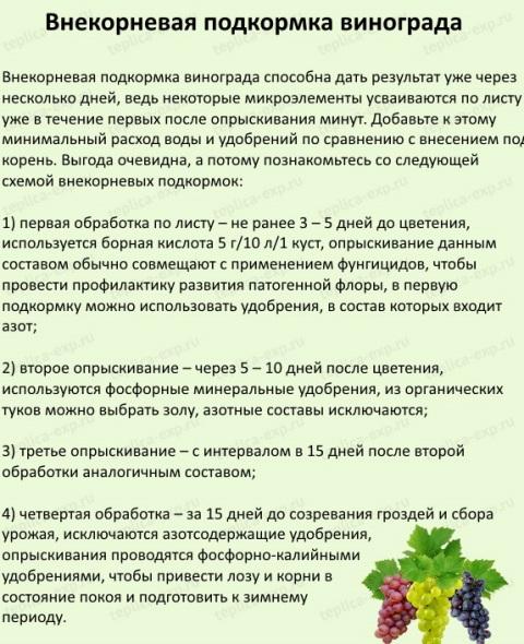 Правильный уход за виноградом, календарь виноградаря весной, летом, осенью