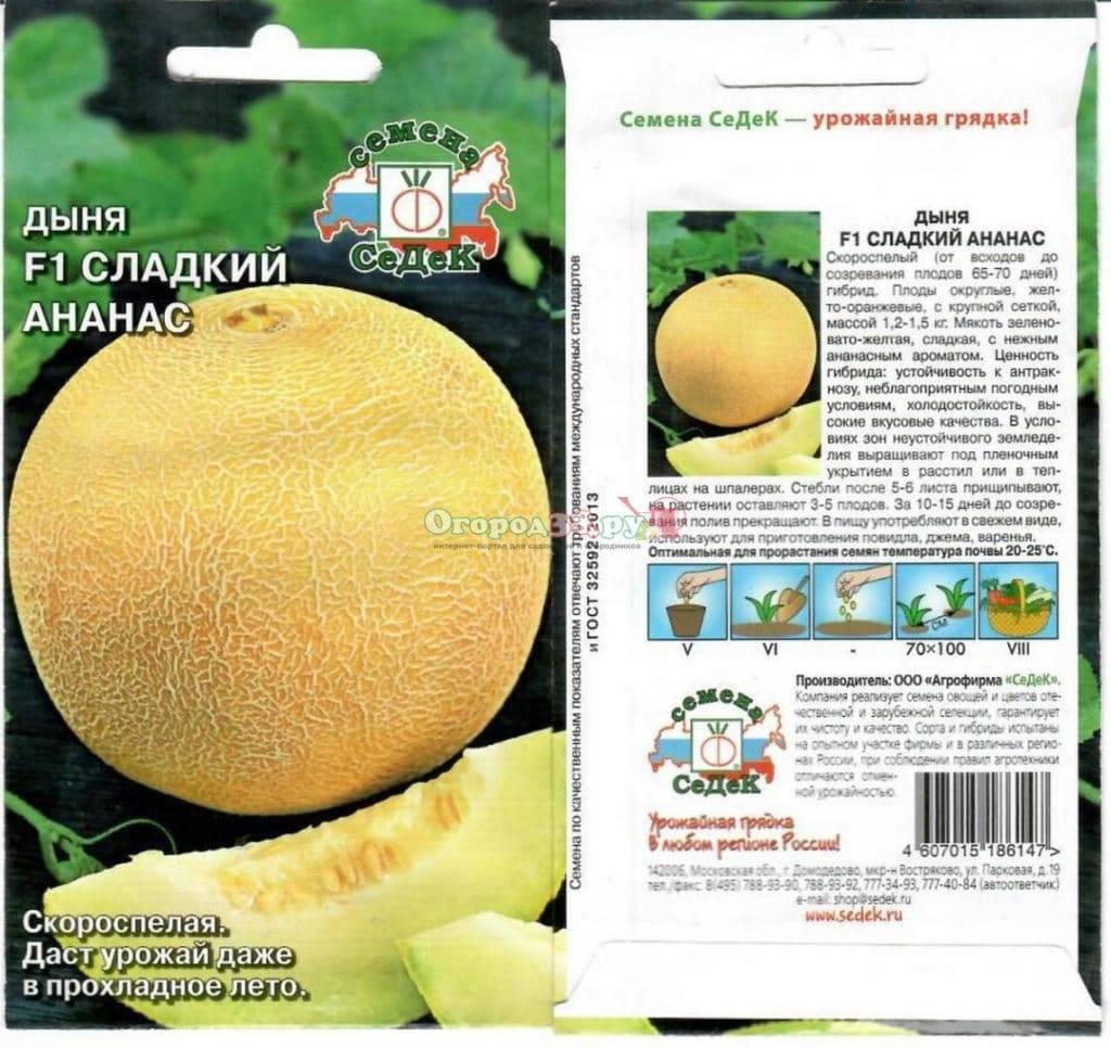 Особенности выращивания дыни в сибири, в том числе в открытом грунте, а также какие сорта выбрать для данного региона