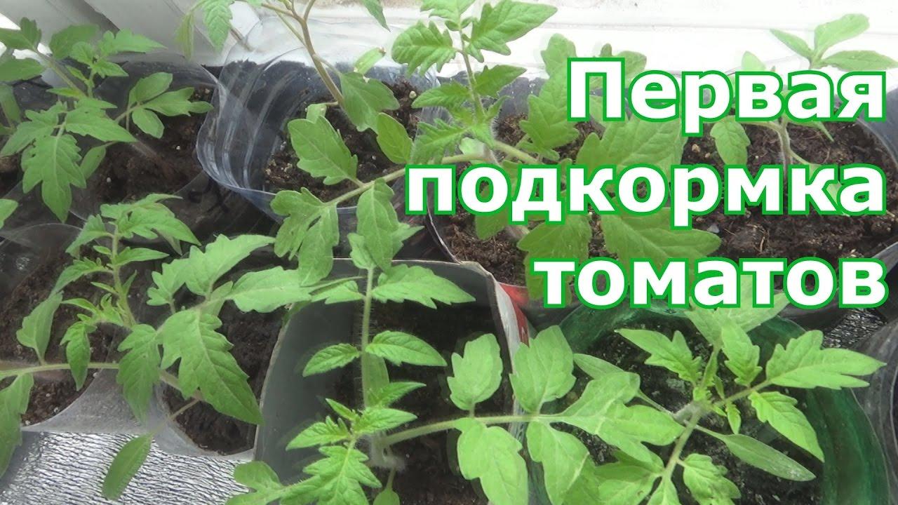 Чем лучше подкормить рассаду помидор чтобы были толстенькие