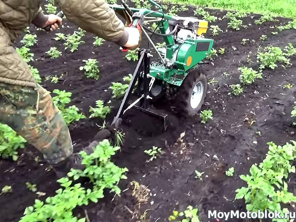 Приспособления для прополки картофеля: покупные, самодельные, простые, разновидности, правила эксплуатации, выращивание картошки без прополки